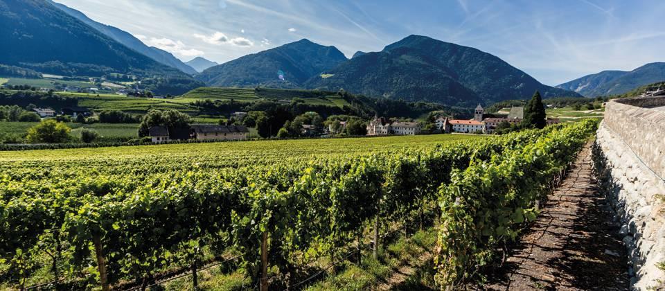 Lust auf Italien: Südtiroler Weinanbau heute