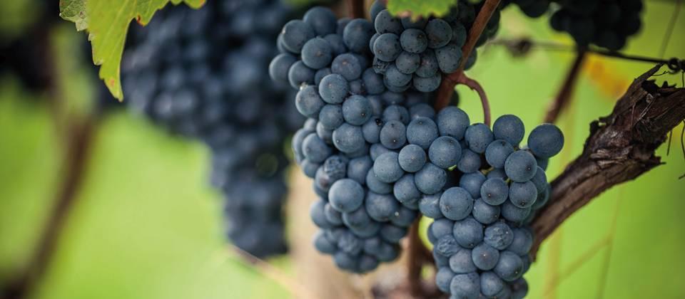 Lust auf Italien: Südtiroler Weine in den 80er