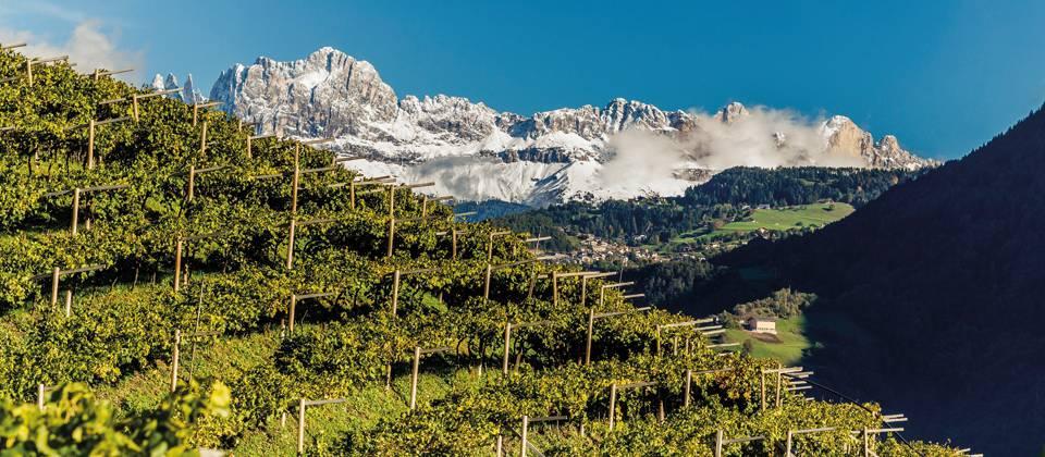 Lust auf Italien: Südtiroler Weinlandschaft