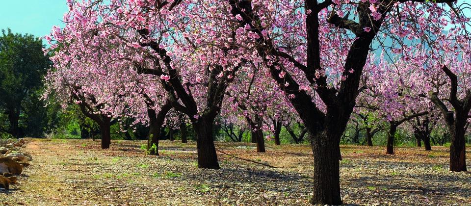 Lust auf Italien, Reisen, Sizilien, Frühling, Mandelbäume