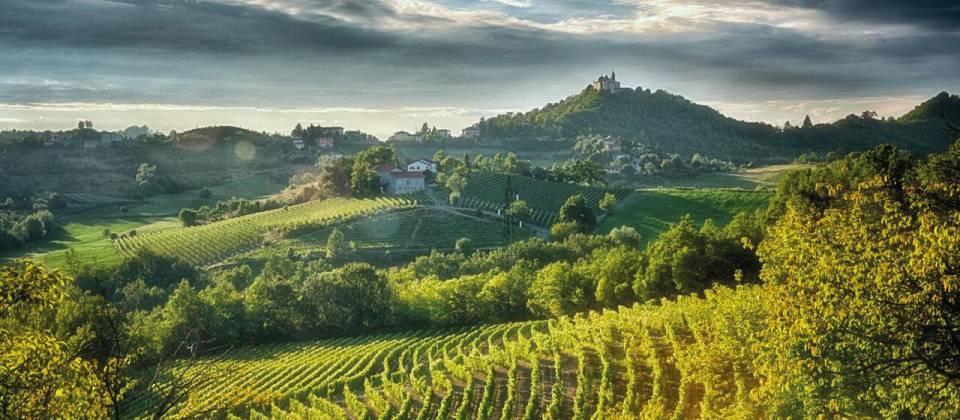 Gavi – Grande Bianco Piemontese Aufmacher
