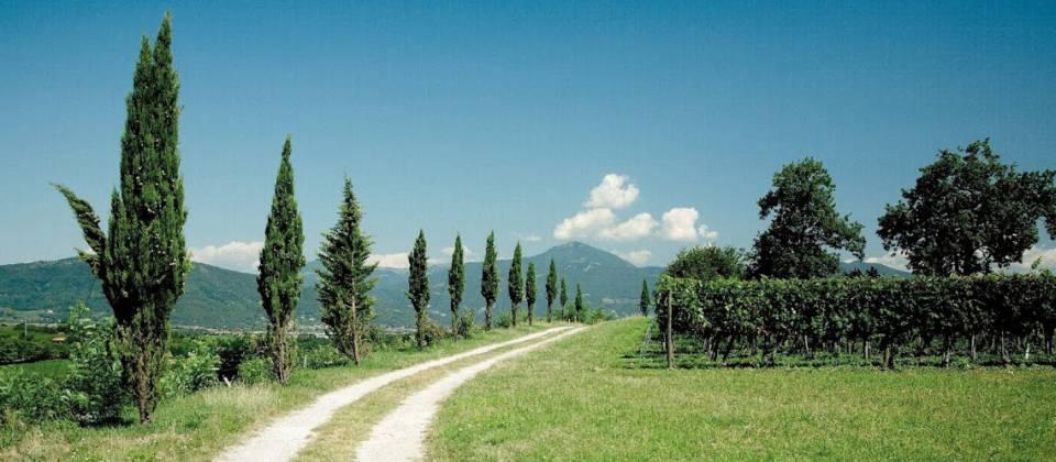 Region Franciacorta