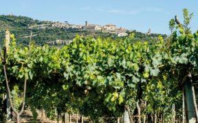 Cortona Wein Beitragsbild