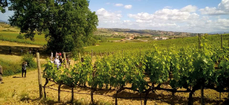 DOC Maremma Toscana Bild1