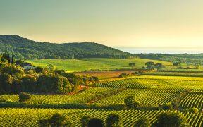 Wein in Italien