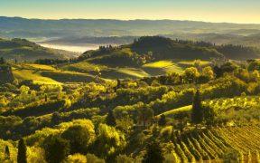 Weißwein Vernaccia San Gimignano