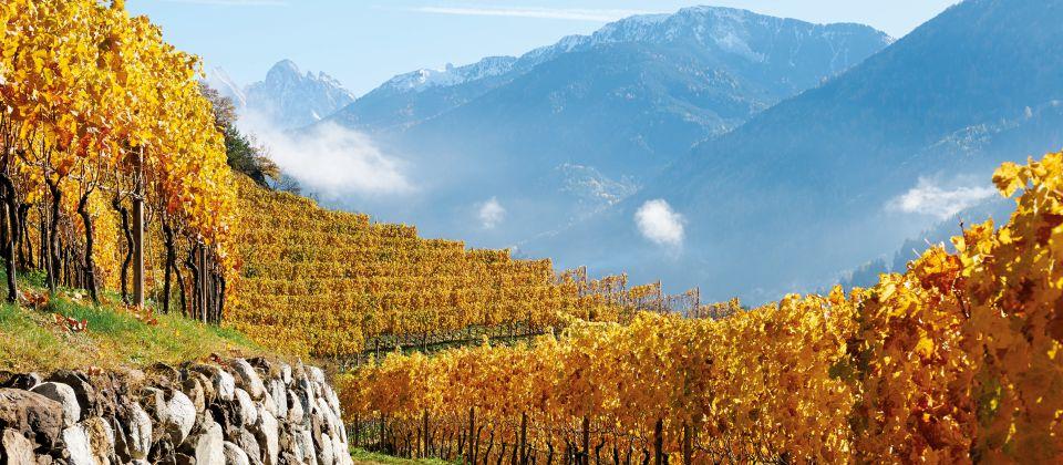 Eisacktal Wein Beitragsbild