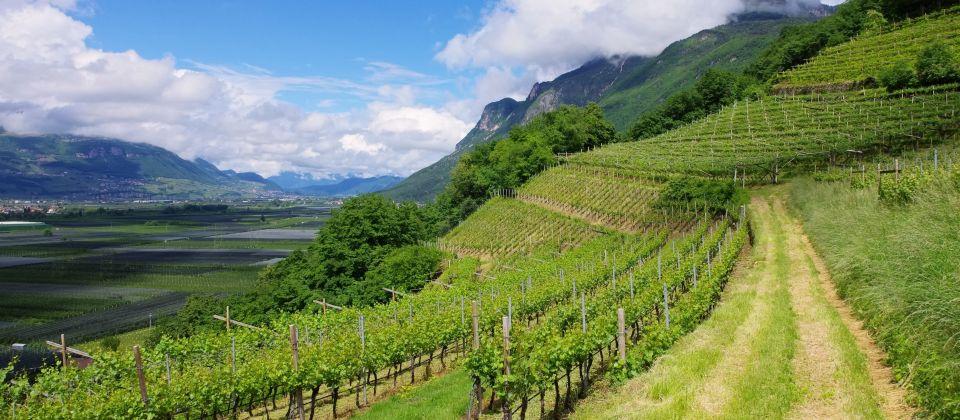 Trentino-Weisswein_Beitragsbild