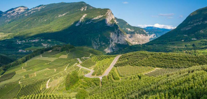 Weinland Trentino Beitragsbild