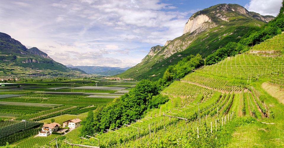 Weinland Trentino Fliestext
