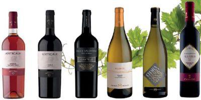 Weinanbau Salice Salentino 400-200